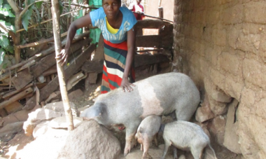 woman pictured with pigs (Mauriri)