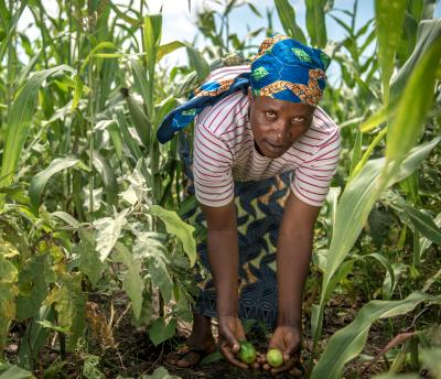 DRC - woman leaning over in field